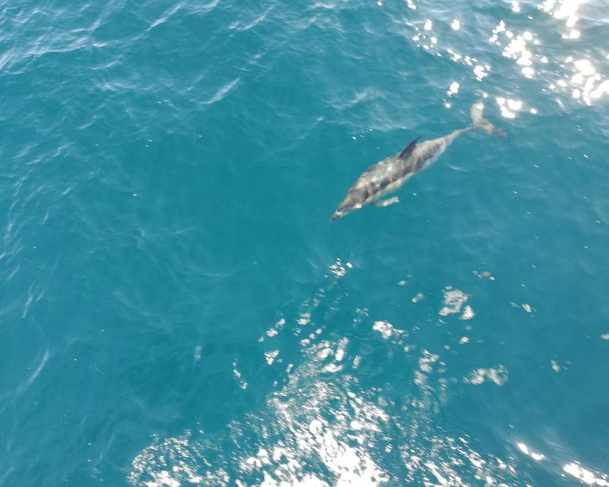 Avistamiento de cetaceos 4 5 4 ok