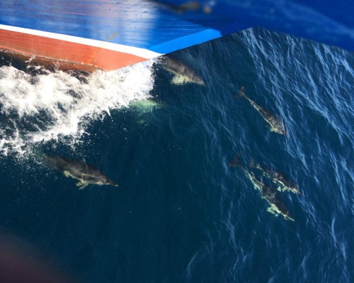 Avistamiento de cetaceos 5 4 ok