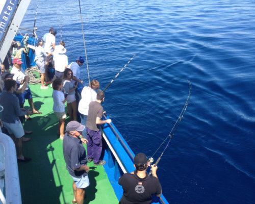 pesca 3 5 4 ok
