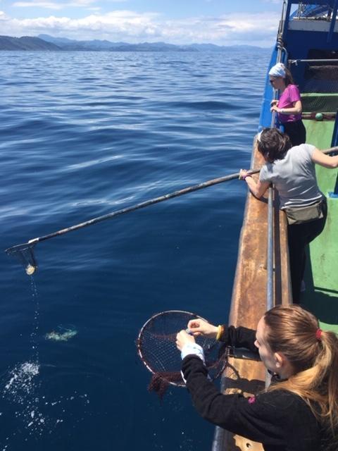 pesca basuras 3